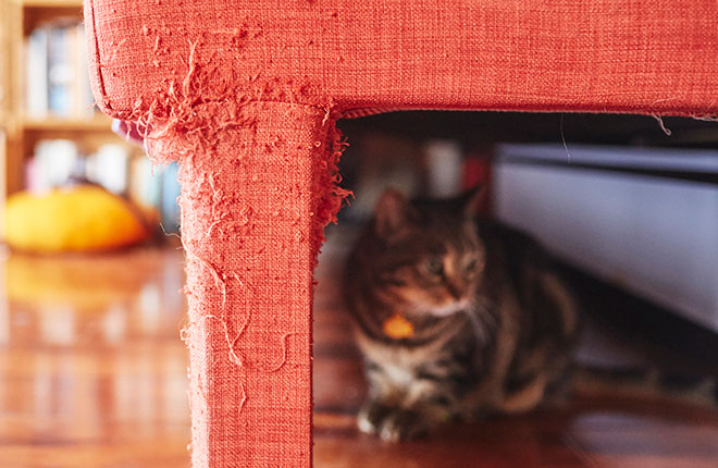 How To Stop Cats From Scratching Your Furniture Zoetis Petcare