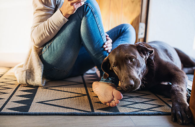 The Importance of Continuous Pain Management for Your Dog