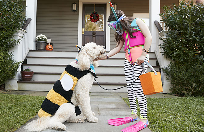 Halloween Safety Tips for Pets