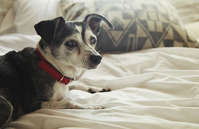 Why Preventive Testing is Crucial for Senior Pets