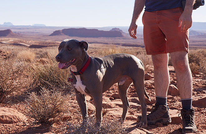 What Are the Symptoms of Heartworm Disease in Dogs?