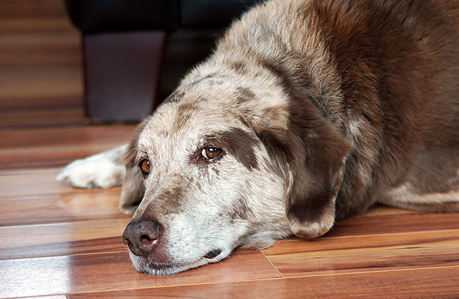 Understanding Your Dog's Osteoarthritis Symptoms