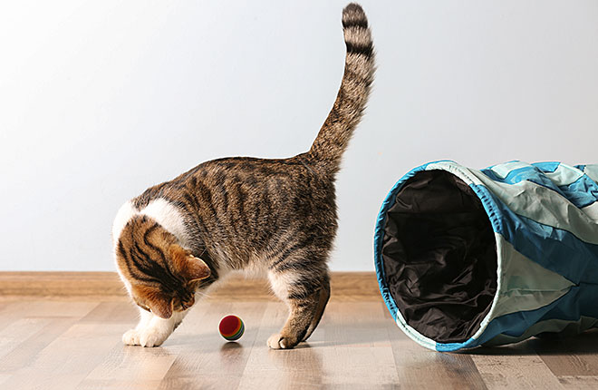 What to Buy for a New Cat