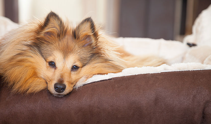 How to create an arthritis-friendly home for your dog