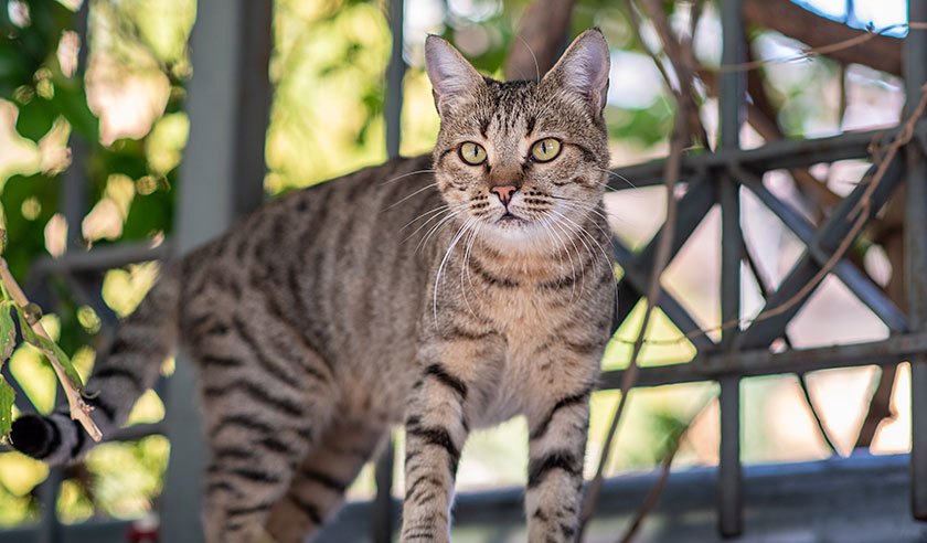 Catios: Safe outdoor exploration for cats