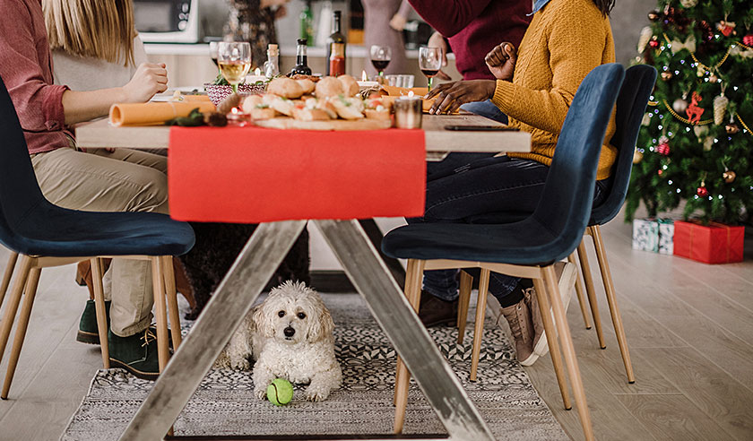 How to Have a Dog-Friendly New Year's Eve