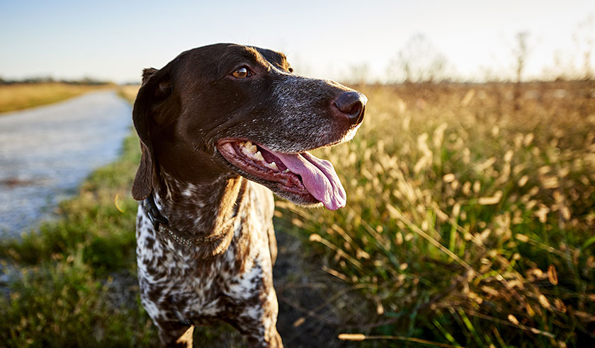 Is your dog at risk for Lyme disease?