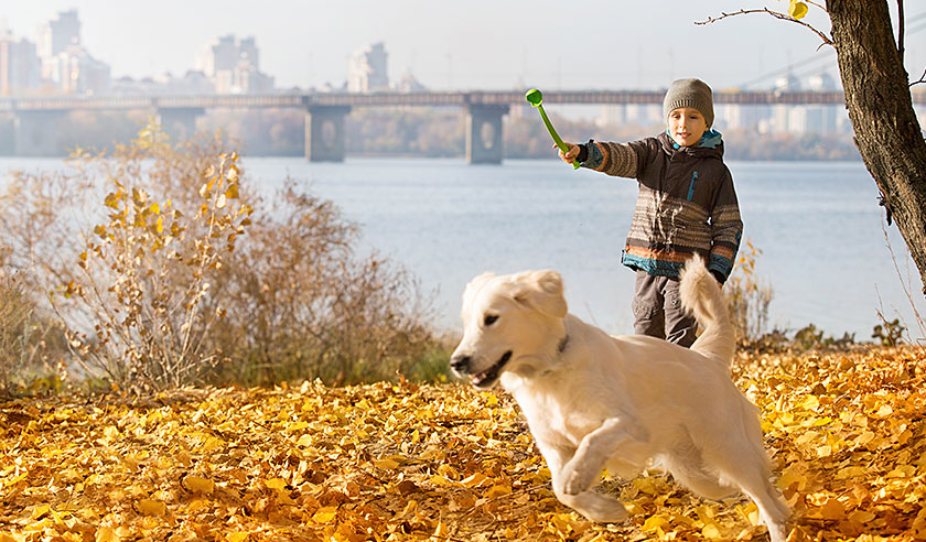 Fall activities for you and your dog