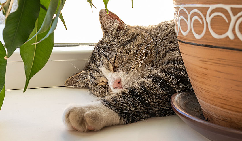 The impact of chronic pain on your cat's quality of life