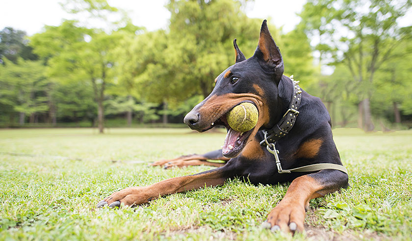 What type of chew toys are safe for dogs?