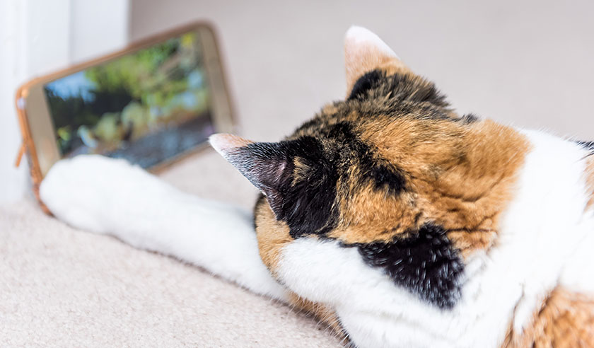 Using Technology with Your Cat