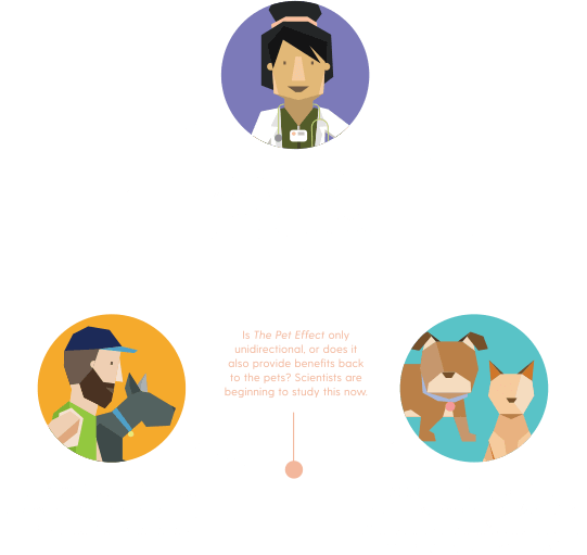 vets pets and owners chart