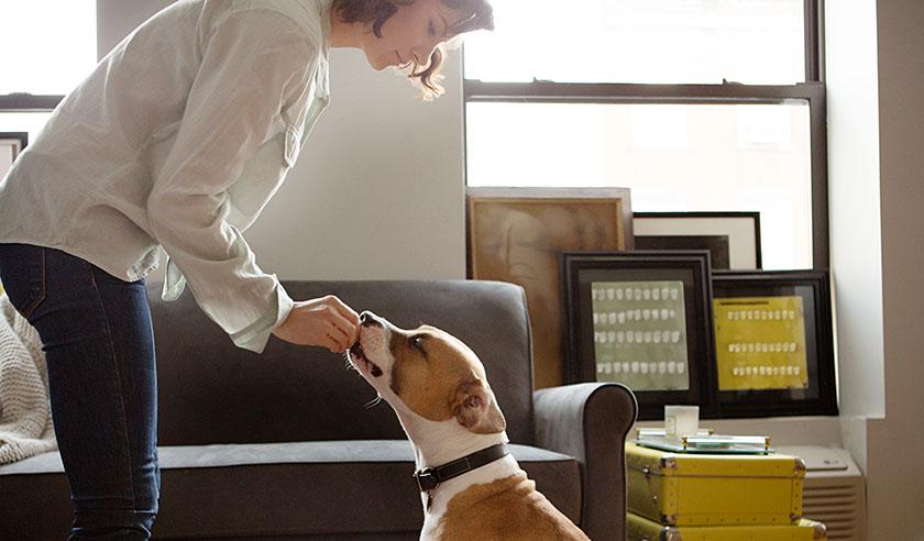 Woman feeding dog a treat