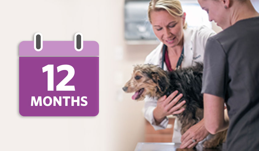 12 month calendar with vet and dog